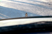 Squirell is holding them up - taken through car windshield